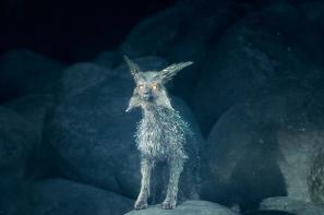 vulptex-the-crystal-fox-star-wars-the-last-jedi